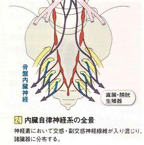 内臓自律神経系の全景