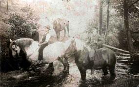 """Die Pferdeschwemmen - angemessen tiefe und ruhig fließende Stellen in der Röder - waren """"gut besucht"""""""