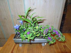 豊福先生作のサンプルです。「植え方は紫式部の枝ぶりをみてね」とのことです。他の作品は「今月のニュースとお花」で。