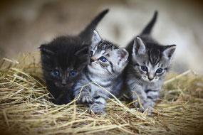 Tierbetreuung/Katzenbetreuung in Hanau und Gelnhausen. Katzensitter, Katzenpension