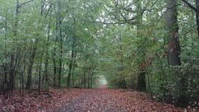 Les enjeux de la reforestation en France pour le climat avec le reboisement forestier.