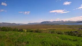 La reforestation en Islande est en marche