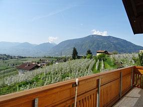 Blick vom Balkon der Wohnung 5 auf die blühende Apfelplantage