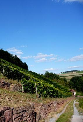 Satzenberg Weinberg Reichholzheim Weingut Alte Grafschaft