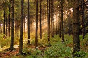 Заказник «Нескучненский лес»