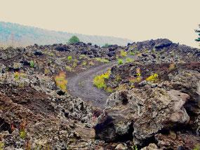 ein steiniger Weg führte zur Gipfelregion