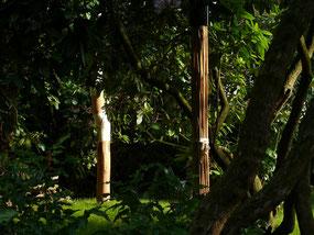 Im Bild zu sehen: Ausschnitt aus meinem Kampfkunst Garten, ein Tou aus Riesenschilf und im Hintergrund Ude Kitae. Es ist wunder schön dort, wenn die Sonne durch die Blätter scheint.