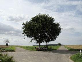 電力自由化の分かれ道 Photo by Robert CC BY-NC-SA 2.0