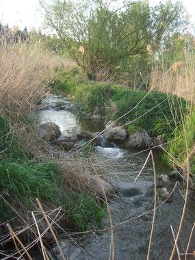 Fischweg Faulenmühle