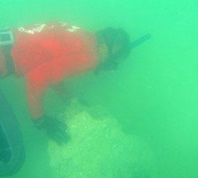 recherche de nudibranches dans des eaux vertes