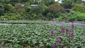 8月、水の抜かれた印月池