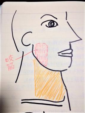美容整体、小顔整体、美顔鍼のキー筋肉は咬筋