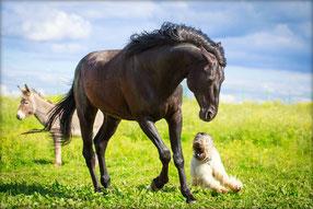 Cutivet Pferd und Hund