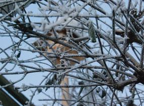 15. Februar 2015 - Winterlandschaft der Vögel
