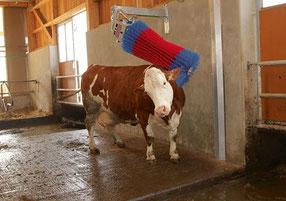 Agro-Widmer Stalleinrichtungen und Silos - Aktuell Bürste HappyCow Swing
