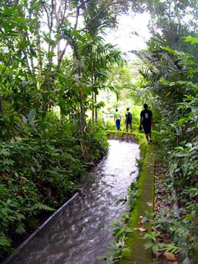 path alomgside a creek