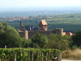 Weinlandschaft mit Neuleininger Burg -           Bärbel Rudolph-Leible