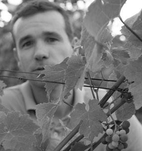 Vigneron à Saint Nicolas de Bourgueil