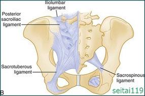 仙結節靭帯