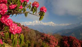 Reisen während Corona im Himalaya, Covid-19