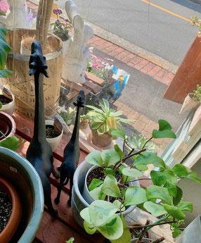 ガーデニングショップ かのはの ガーデンマスコット キリン 黒一色なのでインテリアに素敵です トライアンギュラス アガベ