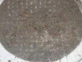 回収したカーペットパイル下部に蓄積した汚れ
