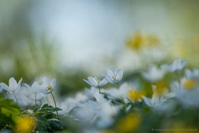 Frühling am Waldrand