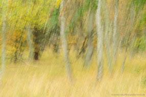 Herbstwald auf dem Darß