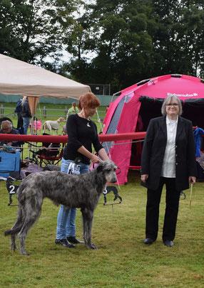 Scottish Deerhounds von Alshamina, Deerhound Züchterin Nadja Koschwitz/Bauler/Rheinland-Pfalz!