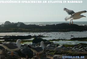 Individueller FRANZÖSISCH - Sprachkurs am Atlantik in Essaouira in Marokko mit viel Zeit für intensive Erholung!