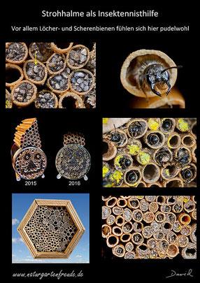 Schautafel poster Strohhalme  straws Insektennisthilfe insect nisting aid Insektenhotel insect hotel Wildbienen wild bee Scherenbiene scissor bee Löcherbiene hole-dwelling bee