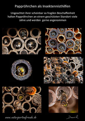 Schautafel poster Insektennisthilfen insect nesting aid Insektenhotel insect hotel Pappröhrchen paper tube Scherenbiene scissor bee