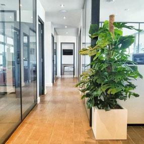 Paysagiste d'intérieur à Paris: Location de plantes d'intérieur pour vos bureaux