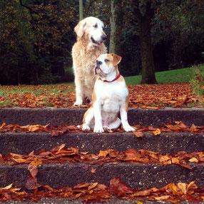 zweiContinental Bulldoggen
