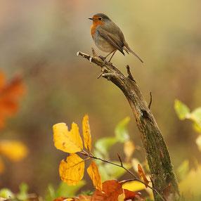 Vogel-fotografie