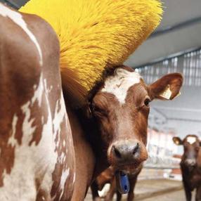 Agro-Widmer Stalleinrichtungen und Silos - Kuhbürste DeLaval
