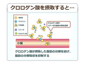クロロゲン酸