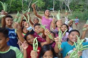 野菜の収穫を行っています