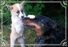 Photo de Leska et Draka pour Dog'N'Co Education canine, Conseil comportemental, Médiation animale à Is sur Tille et alentours