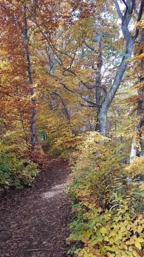 Schöner enger Waldweg