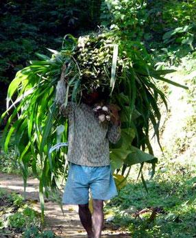 Bauer mit Grasbündel auf Weg