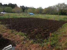 畑を耕しました