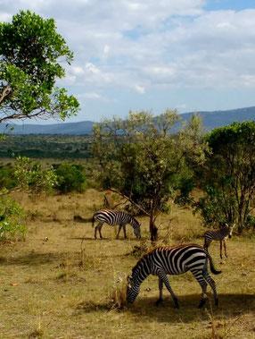 Maasai Mara Reserve near Nairobi, kenya. Dante Harker