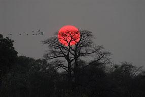 Sonnenuntergang am Kavango