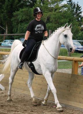 Begleitender Sitz & ein gut ausgebildetes Pferd in feinem Dialog während einer Vorführung am Halsring vor Publikum.