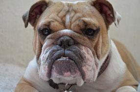 Geruchsbelästigung Mietshaus Hunde