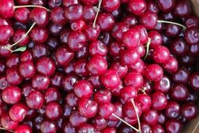 Kirsch-Likör Herstellung nur mit erntefrischen Kirschen aus regionalen Anbaugebieten