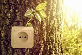 Naturstrom Baum