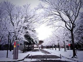 国際教養大学のキャンパス 大金さん撮影