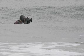 水中からの撮影です。